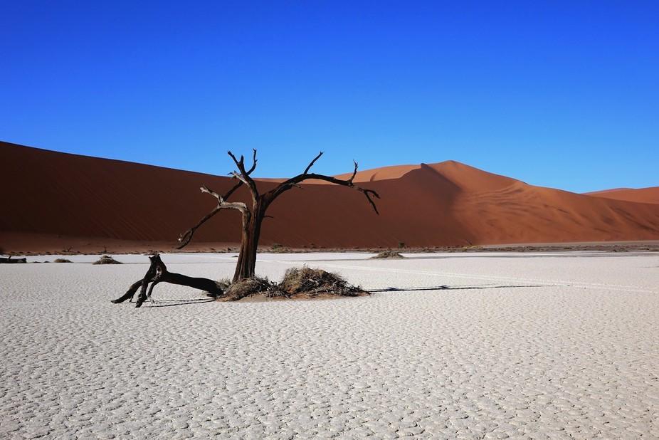 NAMIBIA - SOSSUSVLEI - HIDDEN VLEI - SILENT TREE