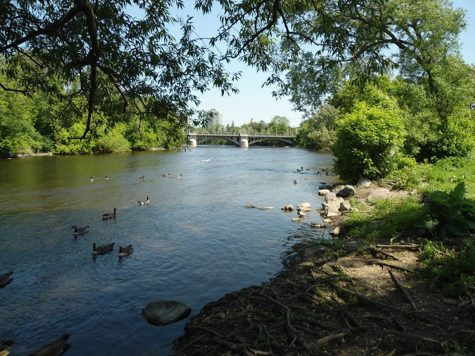 A view of the Cummings bridge along the shoreline of the Rideau river in Ottawa, Ontario, Canada
