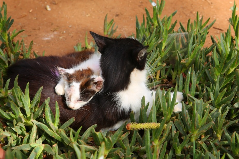 This little guy was taking a sleep on mothers back.  It looked like it had been growing up fast o...
