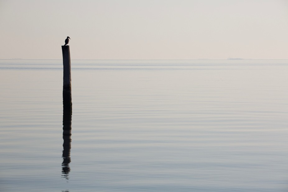 A morning scene on the York River with a great cormorant looking on and ships in the distance.