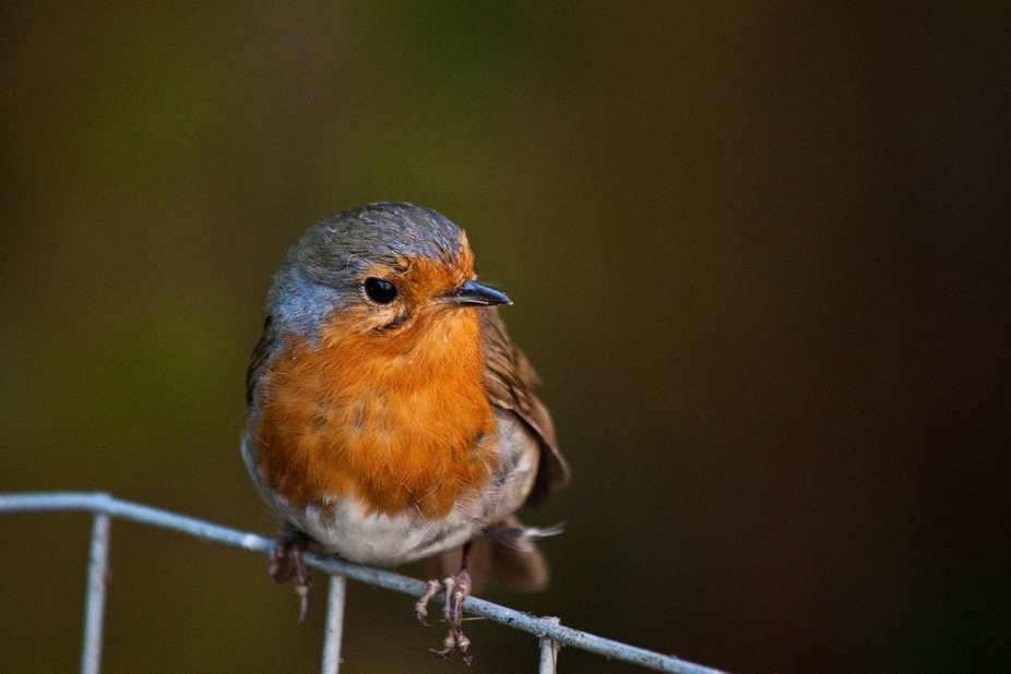 This little chap was helping me in the garden collecting all the bugs and worms that I disturbed....