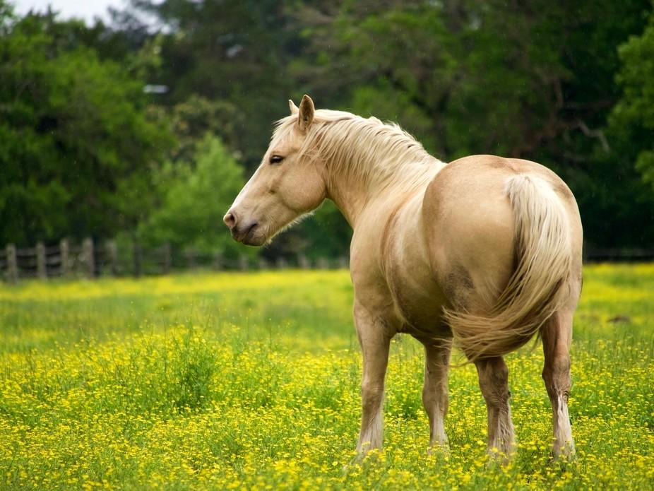 A Draft Horse