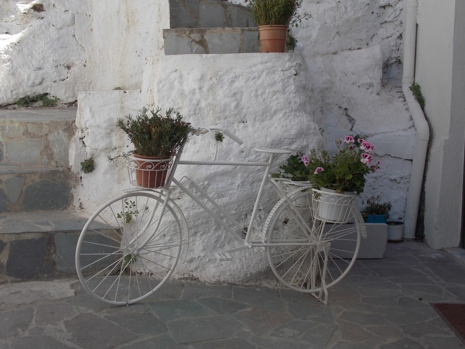 This bicycle display was tucked back in the shadows and just looked so picturesque
