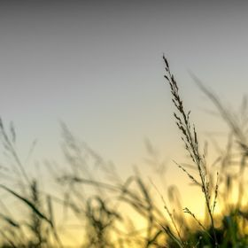 Watching the sunrise through a field of grass.