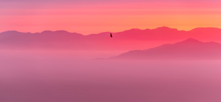 This gorgeous bird of prey seemed to wait on finding prey while it enjoyed the sunset over the Ma...