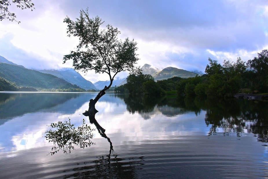 The Lone tree is on the shore line of Llyn Padarn, Llyn Padarn is a glacially formed lake in Snow...