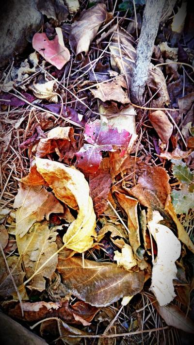 Leaves in floor