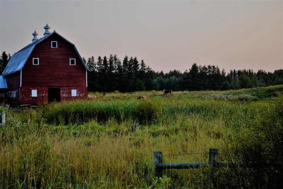 Horses & Barns