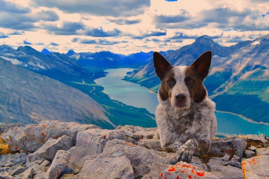 We hiked to the top of Little Lougheed in Kananaskis, Alberta, Canada, on a beautiful day- Bandit...