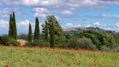 View across  a Poppy Field near Montepulciano