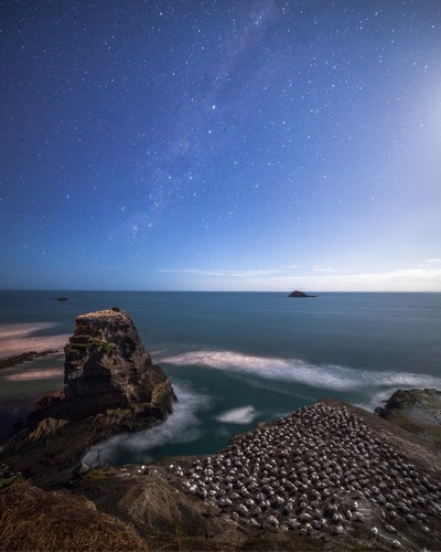 Sleeping gannets under the Milky Way on a moonlit night. It's safe to say that they have the best views in the house!