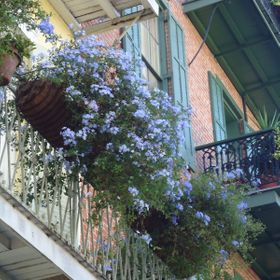I was in New Orleans and the balconies entranced me.