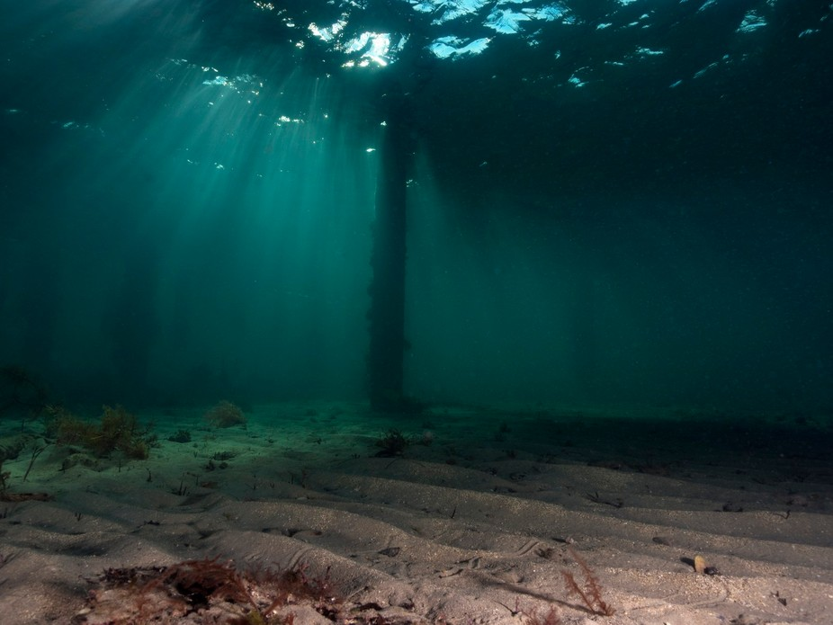 Light rays under the pier like and under water forest