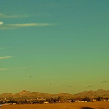 Beaver Moon and Sandhill Cranes