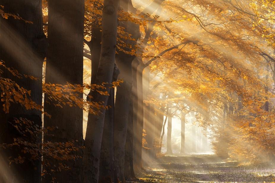 the autumn lights