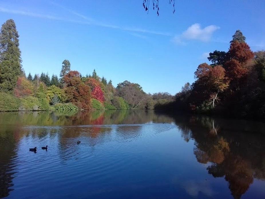 Autumn at Sheffield Park