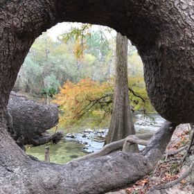 Natural framing of the Suwannee River