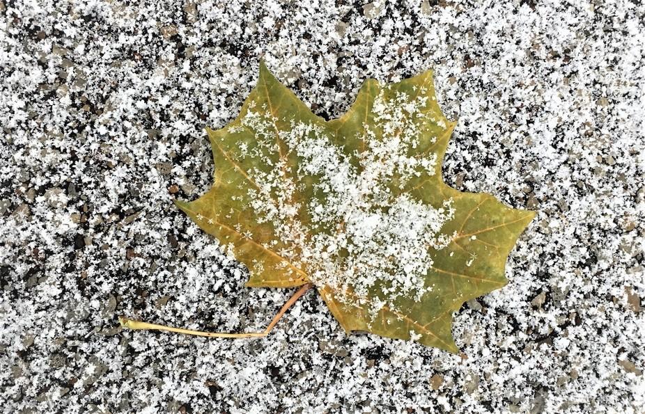 Falls 1st snowfall