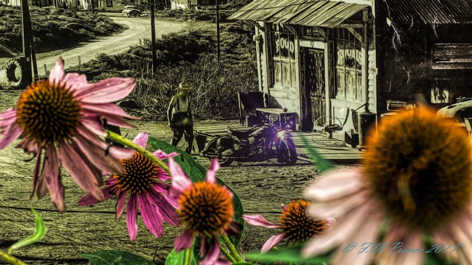 The flowers are real, the back drop is an old print. I had uploaded this image in sepia a while b...