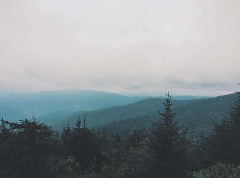 A foggy day in the Great Smoky Mountain National park