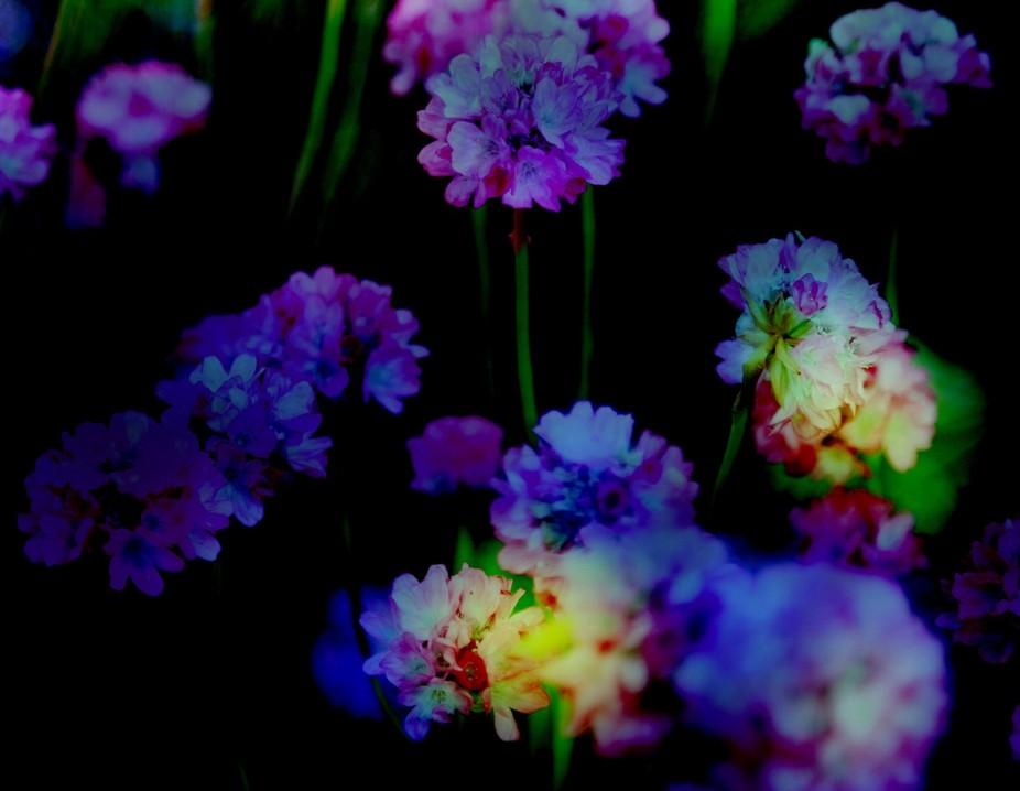 more flowers copy