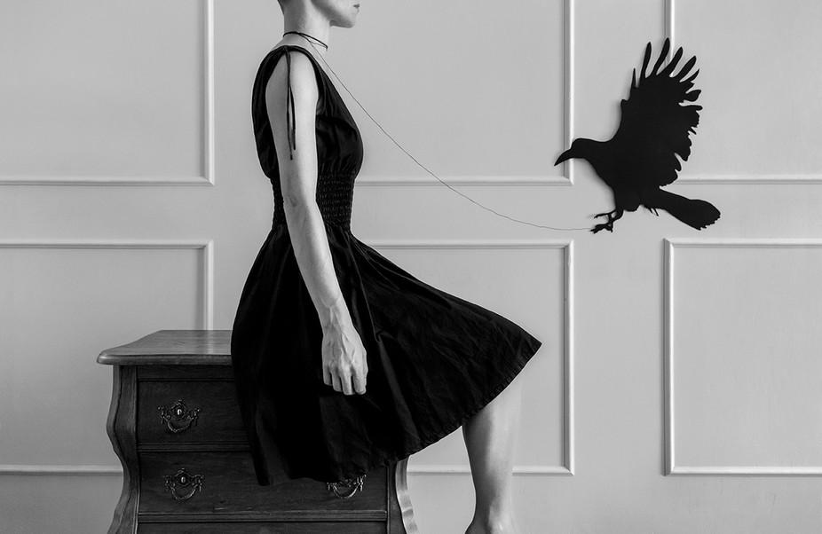 Feketetollú/Black feathered