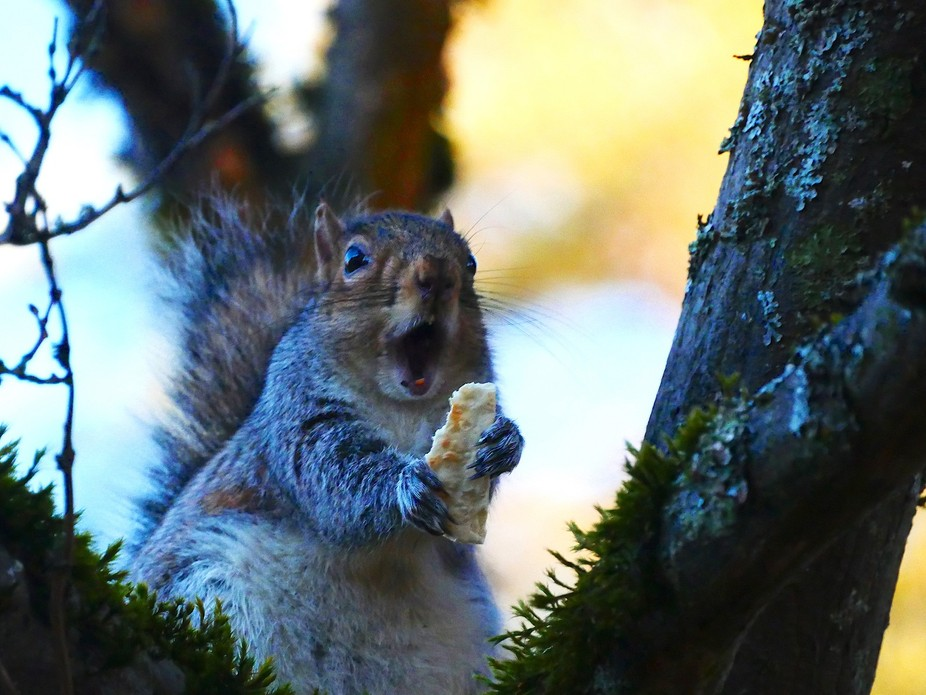 Squirrel with a Cracker!