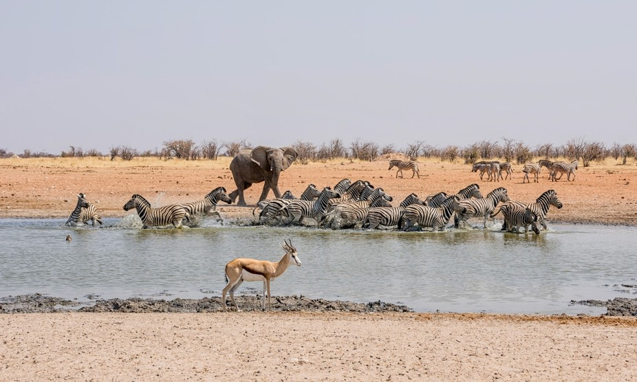 A young Elephant getting possessive at the watering hole