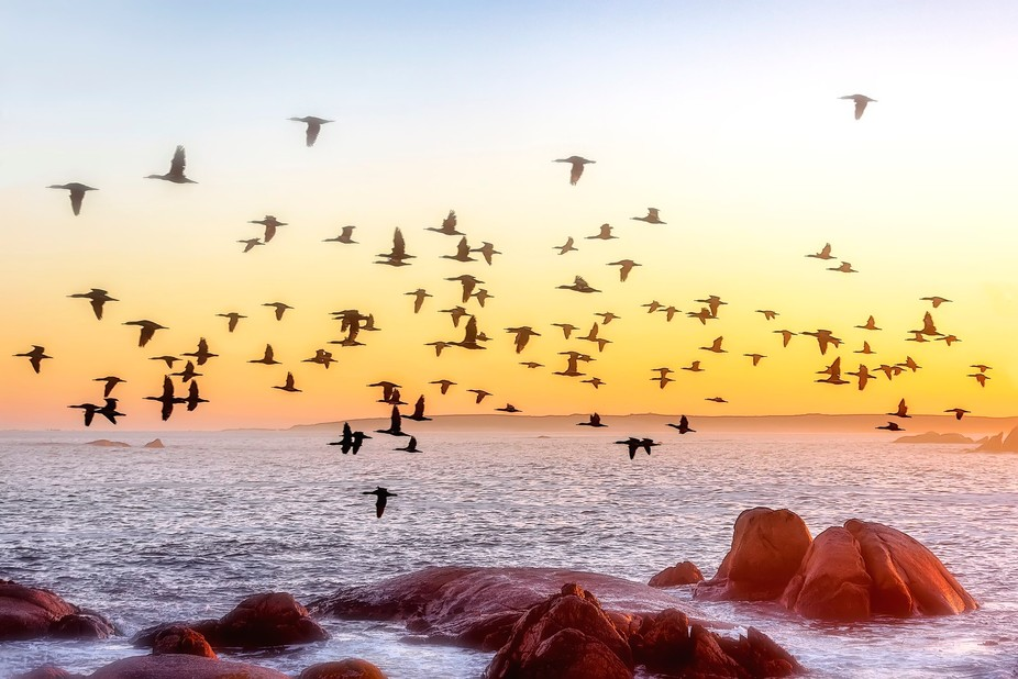 Birds silhouettes at a beautiful sunrise on the West Coast of South Africa