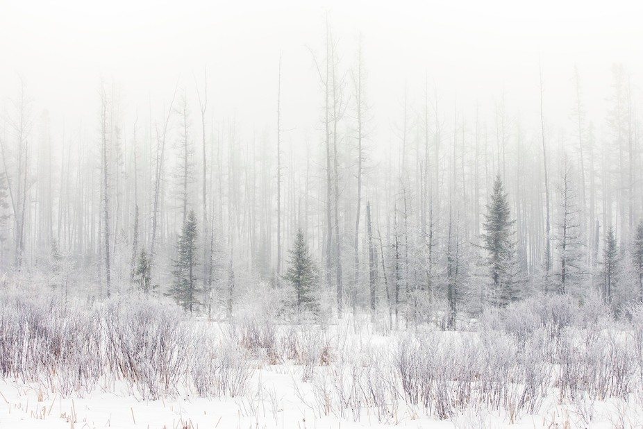 The Hoarfrost in Margie, Minnesota, USA. Slowly the frozen fogs covered everything visible in the...