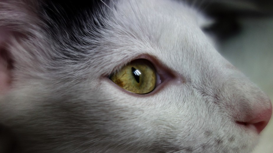 Close up of my cat