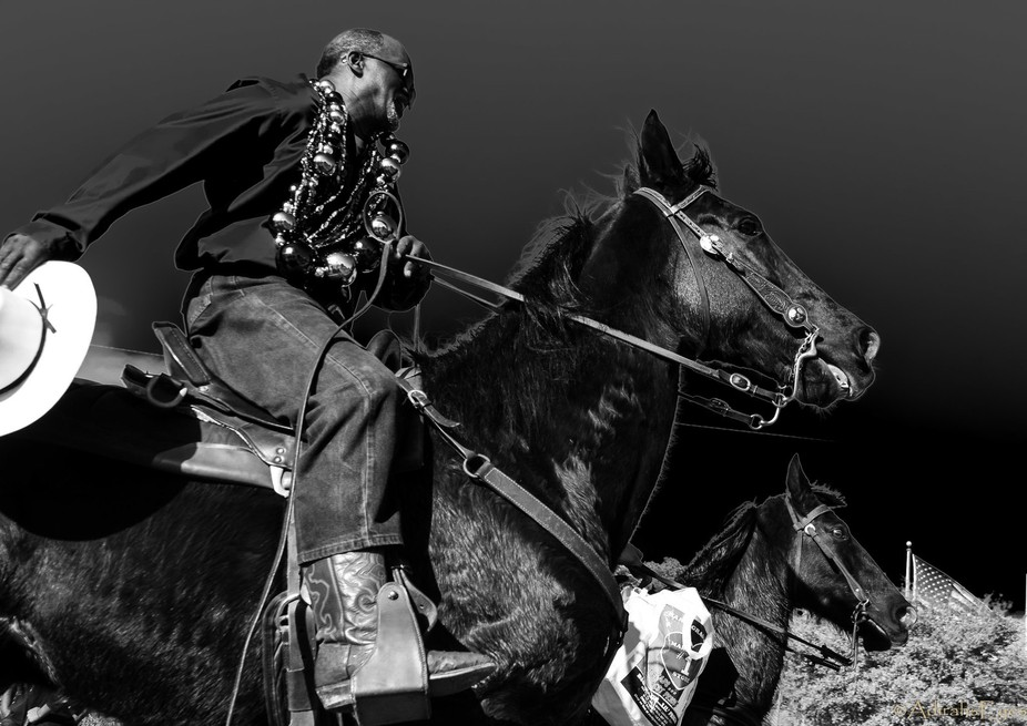 These horses were in a Mardi Gras parade. The parade had lagged and there was enough space for th...