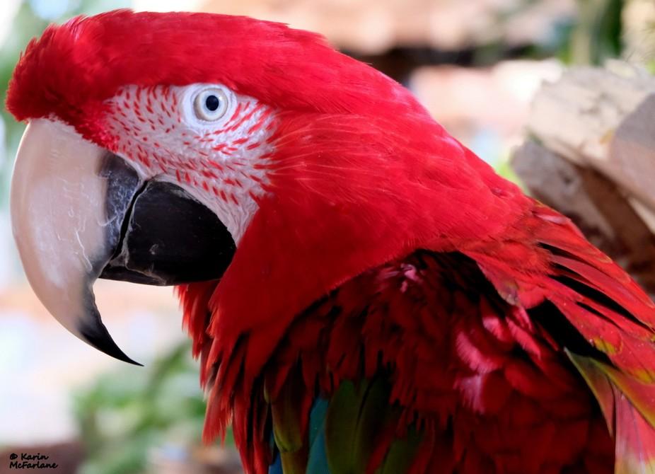 Macaw, Gulf World, Panama City Beach, Florida