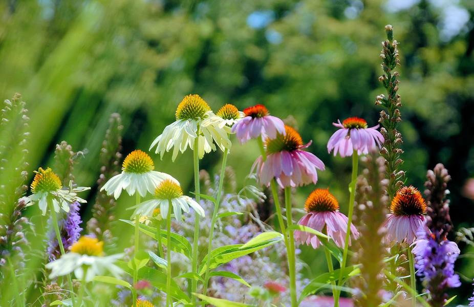Summer Wildflower Field