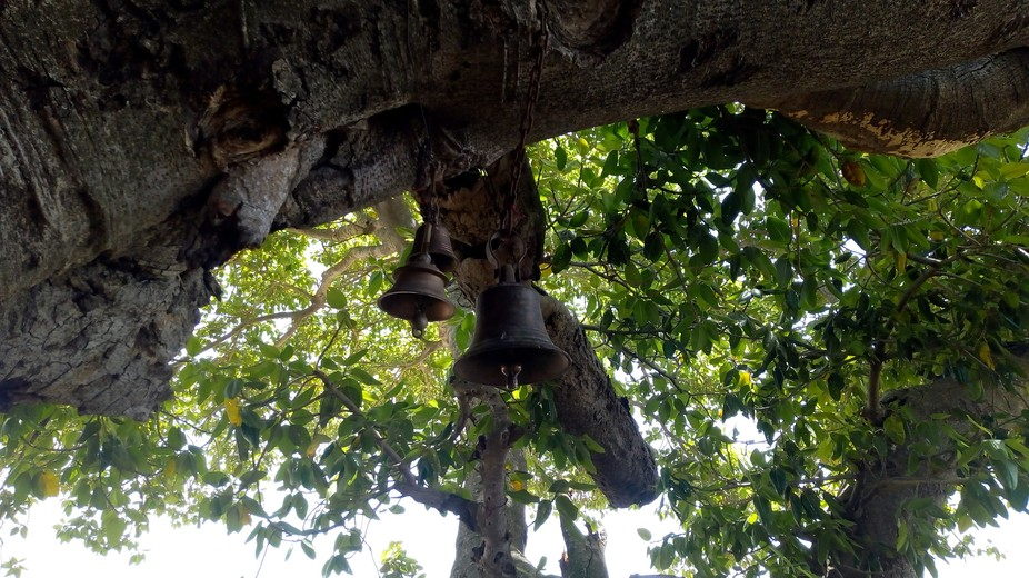 Picture shows temple bell hanging on a tree. This picture was taken from a temple near my village...