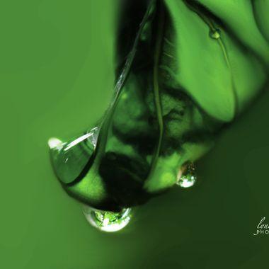 Basil Dripping