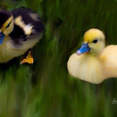 Ducking Siblings