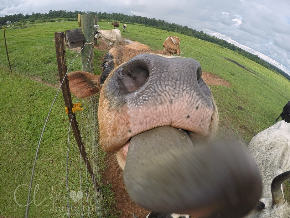 Aren't those giant nose holes.. just ahhmazing?! !!! :):) Happy August, y'all !...