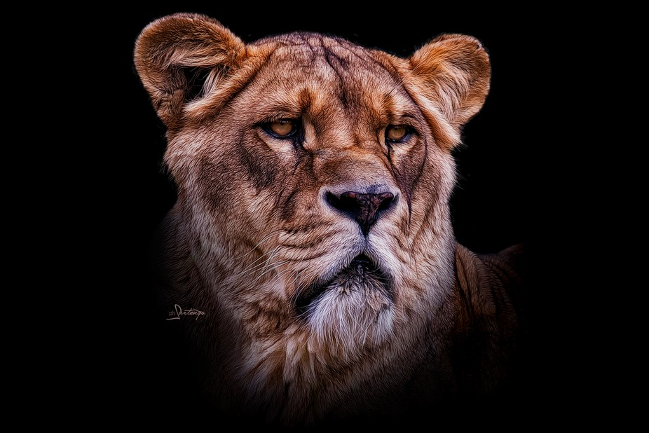 The lioness watched motionless the horizon and listened to the rustle of the wind.