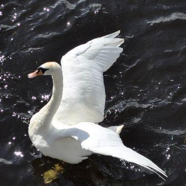 I'm a swan!!
