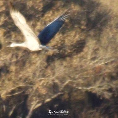 Take flight from danger