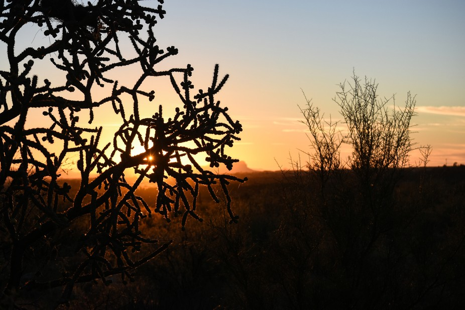I was photographing a sunset in Tucson, AZ and was drawn to the silhouette the Cholla cactus was ...