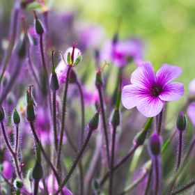 Beautiful purple flowers, enough said :)