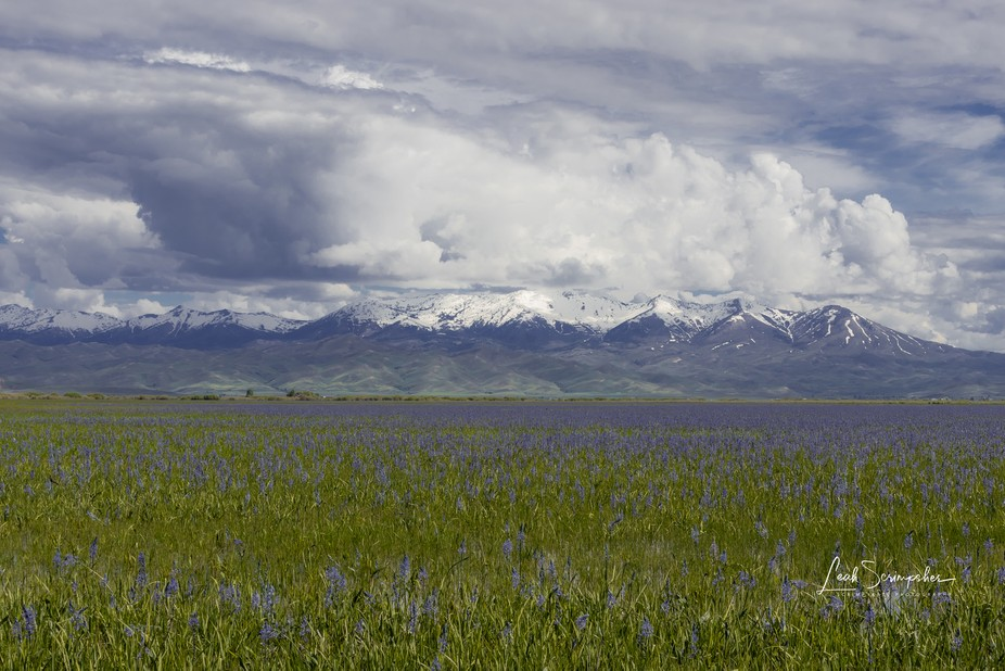 been raining off and on for the last 11 days - took this break in the storms to go to the Camas P...