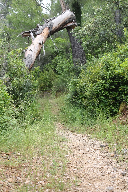 Woodland  trail on Sipan island