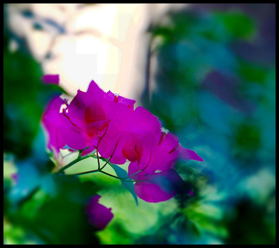A Bogan via flower