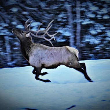 Love to watch these beautiful creatures run as they seem to bounce along